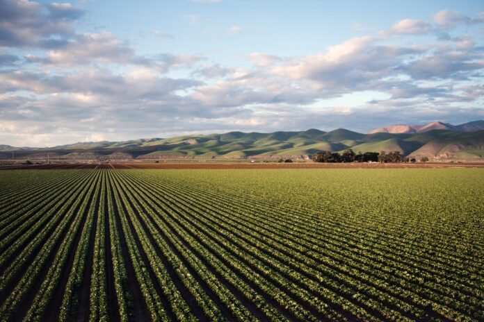 Artificial intelligence in agriculture : using modern day AI to solve traditional farming problems